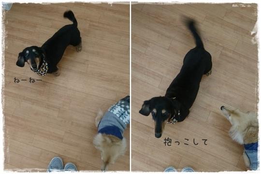 リキくん3.jpg